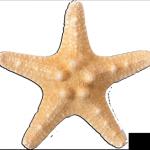 Sternfisch